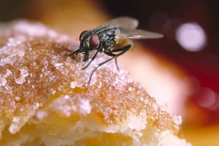 Những cách đuổi và diệt ruồi đơn giản tại nhà – Hiệu quả đến khó tin